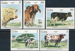 Cuba  Koeien - Boerderij