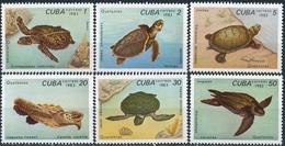 Cuba  Schildpad