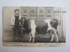 56 Morbihan Pontivy Bot Vétérinaire Vente De Vaches Bretonnes Bidets Et Norfolk Bretons Vache - Pontivy
