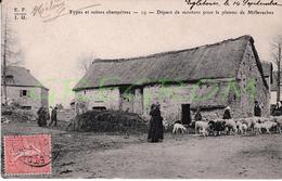 19 : Types Et Scénes Champètres , Départ Des Moutons Pour Le Plateau De  Millevaches