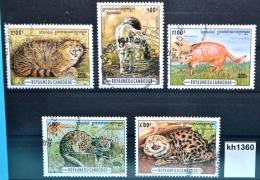 Kh1360 Wildkatzen, Wildkatze, Felis Silvestri, Karakal, Caracal Caracal, KH 1996