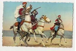 AFRICA - ARAB WARRIORS & HORSE - 1950s/60s ( 891 ) - Cartes Postales
