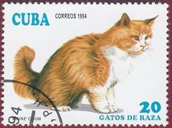 1994 - Maine-Coon (Felis Silvestris Catus) - Yt:CU 3353 - Used (u)