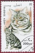 1996 - American Shorthair (Felis Silvestris Catus) - Yt:AF 1506 - Used (u)
