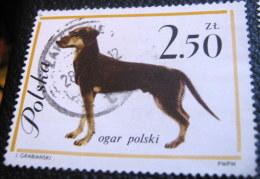 Poland 1963 Dog Ogar Polski 2.50zl - Used