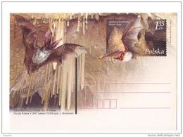 Pologne 2007 Entier Chauve-souris Myotis-myotis Poland Stationnery Card Bat