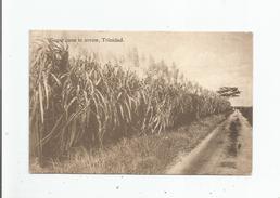 TRINIDAD (TRINITE ET TOBAGO) SUGAR CANE IN ARROW - Trinidad