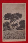 1 Cpa Lebanon Barook Cedars