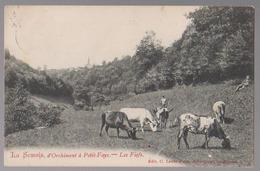 Cpa Orchimont à Petit-fays  Vaches  1909