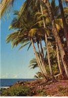 GUYANE FRANCAISE  - ILES DU SALUT - Guyane