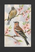 ANIMALS - ANIMAUX - OISEAUX - BIRDS - 2 JOLIS OISEAUX - PINSON COMMUN - Oiseaux