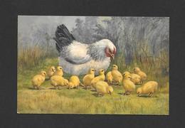 ANIMALS - ANIMAUX - UNE BELLE GROSSE POULE ET SES PETITS POUSSINS - Oiseaux
