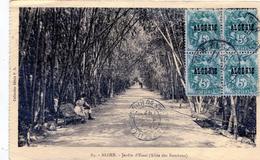 Alger. Jardin D'Essai (Allée Des Bambous)