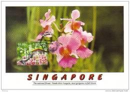 20G: Carte Maximum Card Botanical Garden  Orchid Miss Vanda Joaquim Maxicard, MC 1