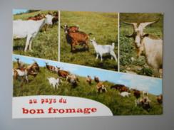 AGRICULTURE CHEVRES AU PAYS DU BON FROMAGE - Elevage