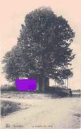 THIMISTER Chapelle Sainte ODILE  1918 - Thimister-Clermont