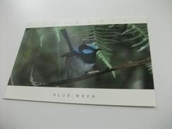 UCCELLO BIRD TASMANIA BLUE WREN - Uccelli