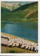 Tadjikistan.  Elevage De Moutons. Grand Format. - Tajikistan