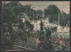 UdSSR, Postkarte, Neu, Sotschi, Sukkulenten,  / USSR, Postcard, New, Sochi, Succulents