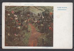 Österreich 1909, Postkarte, Neu, Kakteenhaus  / Austria 1909, Postcard, New, Cactus Warmhouse