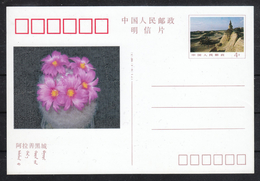 VR China, Postkarte, Neu, Kaktus Mammillaria  / PR China, Postcard, New, Cactus Mammillaria