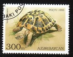 Hermann's Tortoise (Testudo Hermanni) Used Stamp