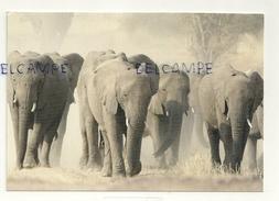 Troupeau D'Eléphants. Photo Jean-Marc Montegnies Botswana. Parc National De  Chobe - Éléphants
