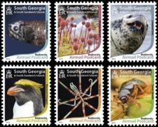 SOUTH GEORGIA 2015 Airmail Postcard, Seal, Penguin, Insects, Fauna MNH - Südgeorgien