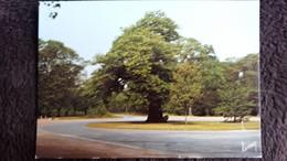 CPSM LE CHENE PRIEUR CARREFOUR FORET DE SENARD - Trees