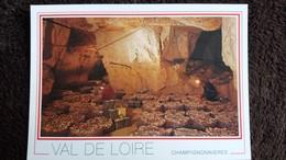 CPM CHAMPIGNONNIERES VAL DE LOIRE CAVE A CHAMPIGNONS ANJOU CARRIERES DE TUFFEAU - Mushrooms