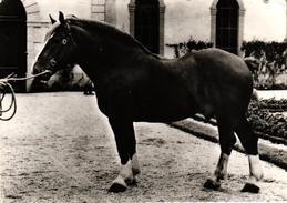 CHEVAL - FRANCE - TRAIT BRETON - Pferde