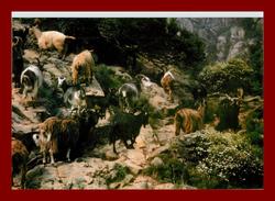 à Ota Troupeau De Chèvres Corse , Tirage à 60 Ex, édition Josan ( Scan Recto Et Verso) - France