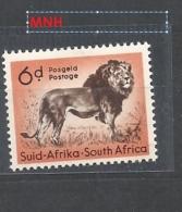 SUDAFRICA     1954 Local Animals   Panthera Leo    MNH - Sud Africa (...-1961)