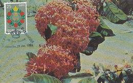 D29100 CARTE MAXIMUM CARD 1964 SURINAM - IXORA NATIONAL FLOWER FAJA LOBIE CP ORIGINAL
