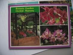 Singapore Botanic Garden Orchid Nursery - Singapore