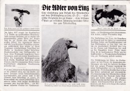 Die Adler Von Linz - Pöstlingberg - Linz Pöstlingberg