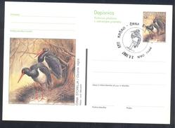 Slovenia 1997 Postal Stationery Card: Fauna Storch Stork Cigogne; The Black Stork (Ciconia Nigra) - Swans