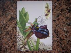 Uk.106S. Orchid.  Ophrys Taurica. Premier Jour. Kartmaksymum. Ukraine. - Fleurs