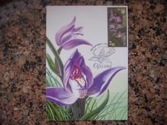 Uk.107S. Orchid.  Cephalanthera Rubra.  Premier Jour. Kartmaksymum. Ukraine. - Fleurs