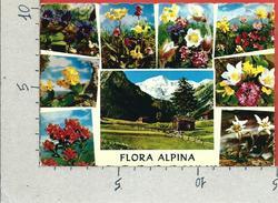 CARTOLINA VG ITALIA - FIORI - Flora Alpina - CECAMI 211 - 10 X 15 - ANN. 1974 - Fleurs