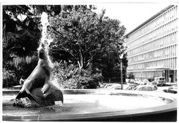 FOTO BIANCO E NERO ANNI 1960 - 1970 FOTO 47 FONTANA CON FOCA FORSE BELLINZONA - Photographs