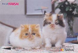 Carte Prépayée Japon - ANIMAL - CHAT Chats - CAT Cats Japan Prepaid Nankai Card 2000 - KATZE Karte - 3877 - Gatos