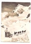 HUNDE - POLARHUNDE / SCHLITTENHUNDE, Jungfraujoch / Schweiz, 1965 - Hunde