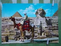 KOV 733 - EGYPT, ANIMAL, CAMEL, CHAMEAU, - Animaux & Faune
