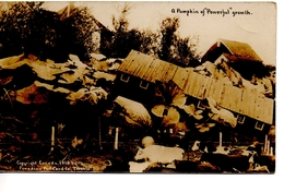"""A Pumpkin Of Powerful Growth"", 1910 Exaggeration RPPC - Canada"