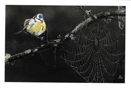 451.MESANGE BLEUE - Pájaros