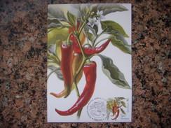 Uk.109S. Légumes. Peppers. Kartmaksymum. Premier Jour. Ukraine. 2016. Vegetables. Chili. Kartmaksymum. First Day. - Autres