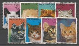 Animaux & Faune - Chats - Cats - Katze - Kat - Gato - Gatto