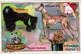 6 Cards C1900 Hondenrassen Dogs Chiens Barbet Dogue Dashond Terrier Griffon Setter Basset Molosse Chien Berger Bulldog - Chromos