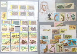 Snakes, Reptiles, Used